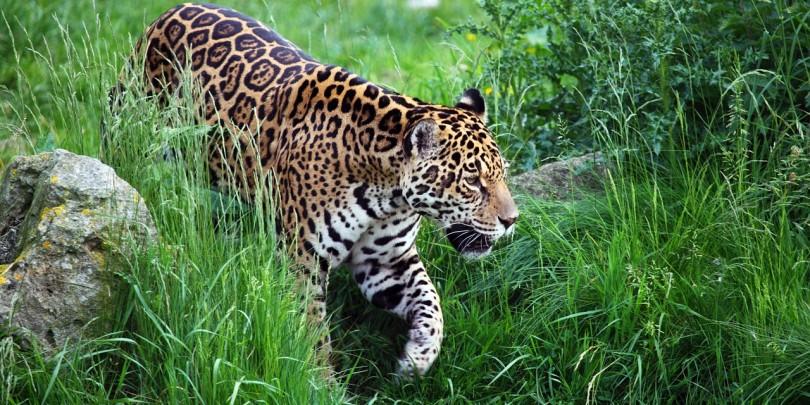 animal-2607_1280